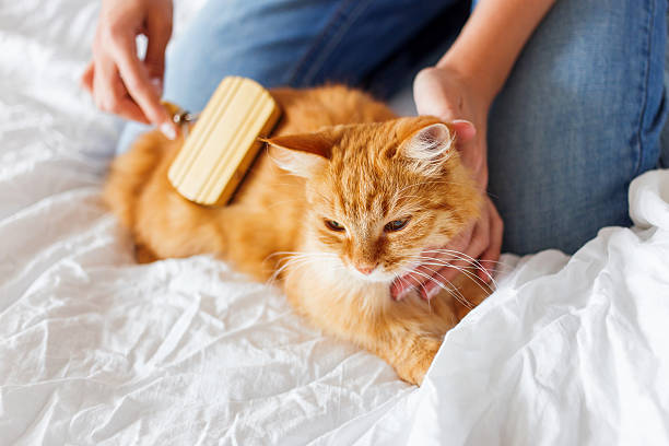 pet grooming miami beach – Why We Should Use Them?